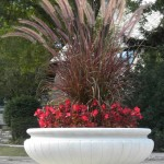 planters-01